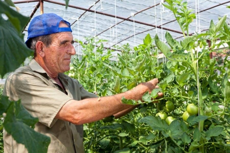 Are investments on the horizon for the vegetable industry?