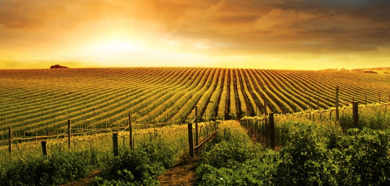 Three-quarters of consumers are willing to may for sustainable produced wines.