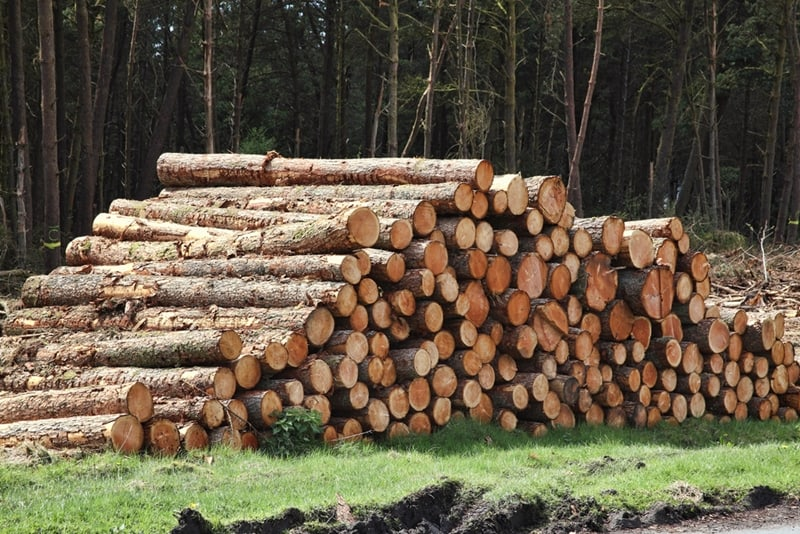 Wooden pallets pose a risk to forest preservation.