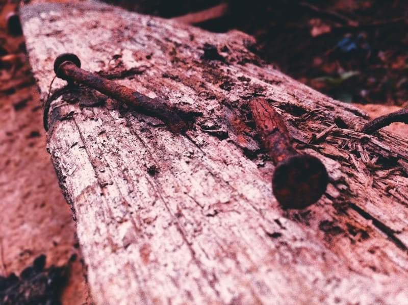 Wood can carry fungal infections that can rot your pallets - and the goods you are shipping.